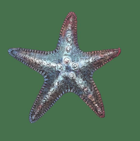 StarfishDrawing