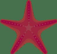 StarfishPink